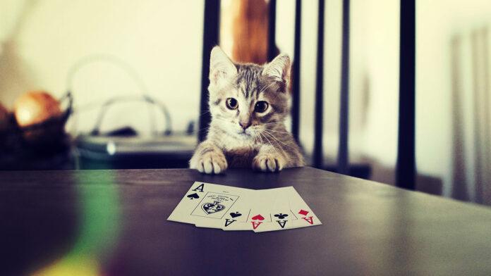 strategie poker notions base debutant